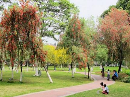 二沙岛艺术公园今起免费开放 休闲健身又有好去处