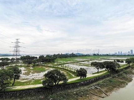 广州市民周末好去处 到网红岛体验都市锦田