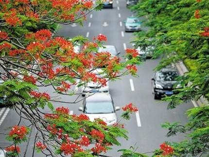 广州着力营造四季花景,让市民乐享老城市新活力